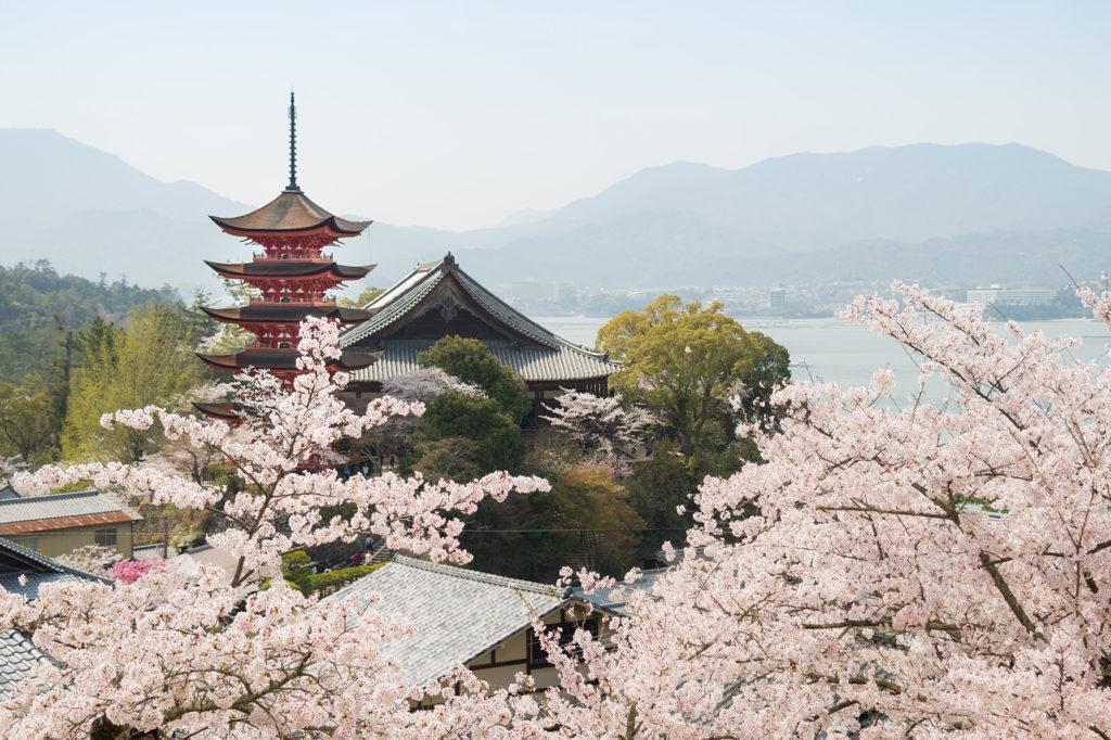 pagoda in Miyajima with cherry blossom